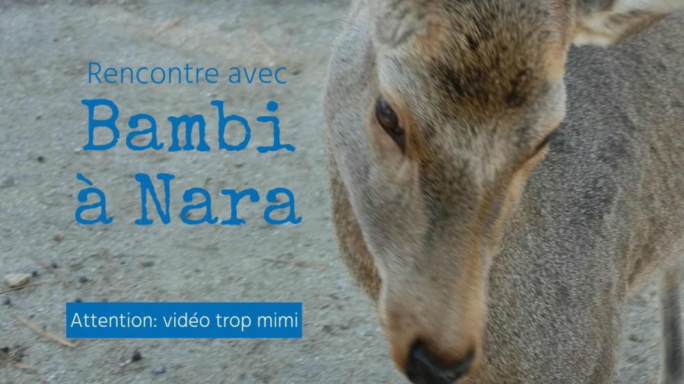 nara - bambi -kyoto - japon