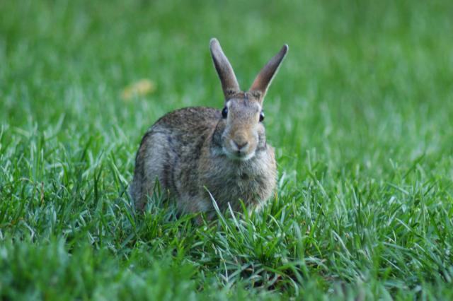 Hiroshima: rendre son séjour inoubliable - rabbit island