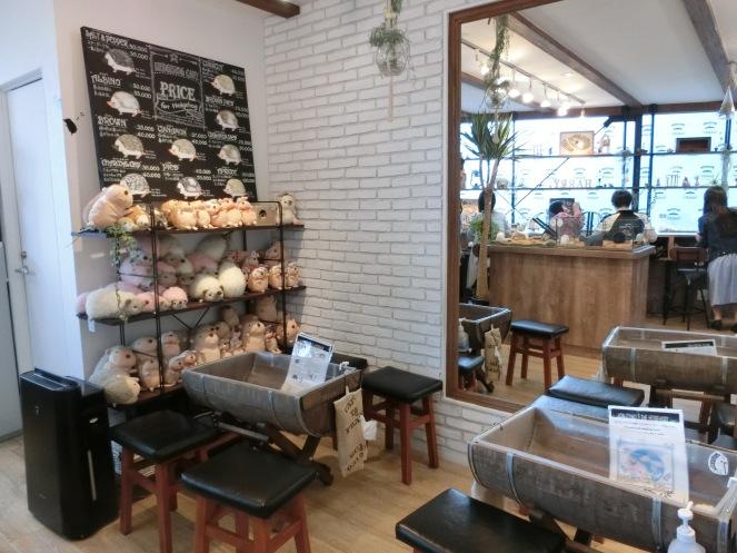 Le café hérisson hedgehog cafe roppongi tokyo japon japan harry harinezumi