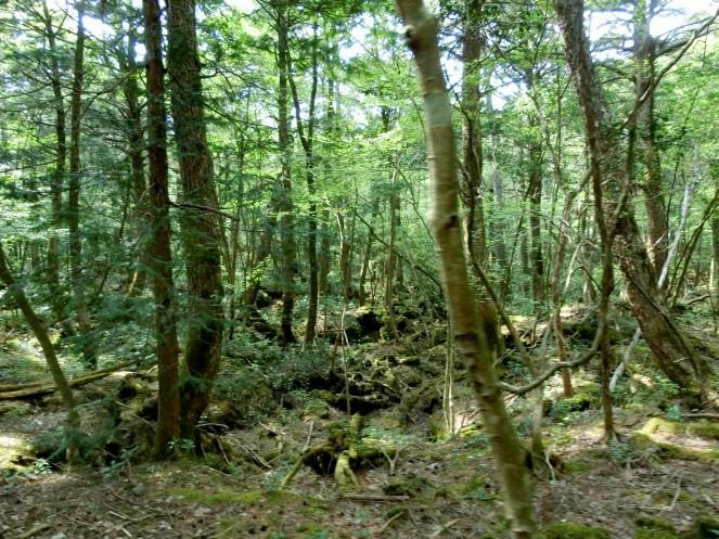 forêt suicide tokyo aller Aokigahara hanté mort