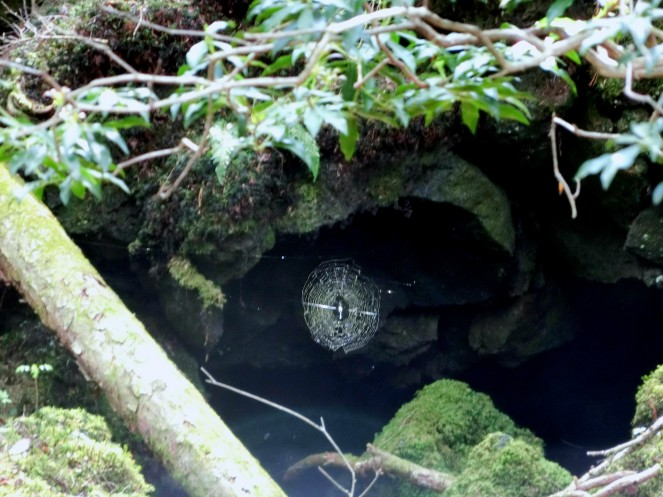 Aokigahara forêt suicide tokyo aller Aokigahara hanté mort