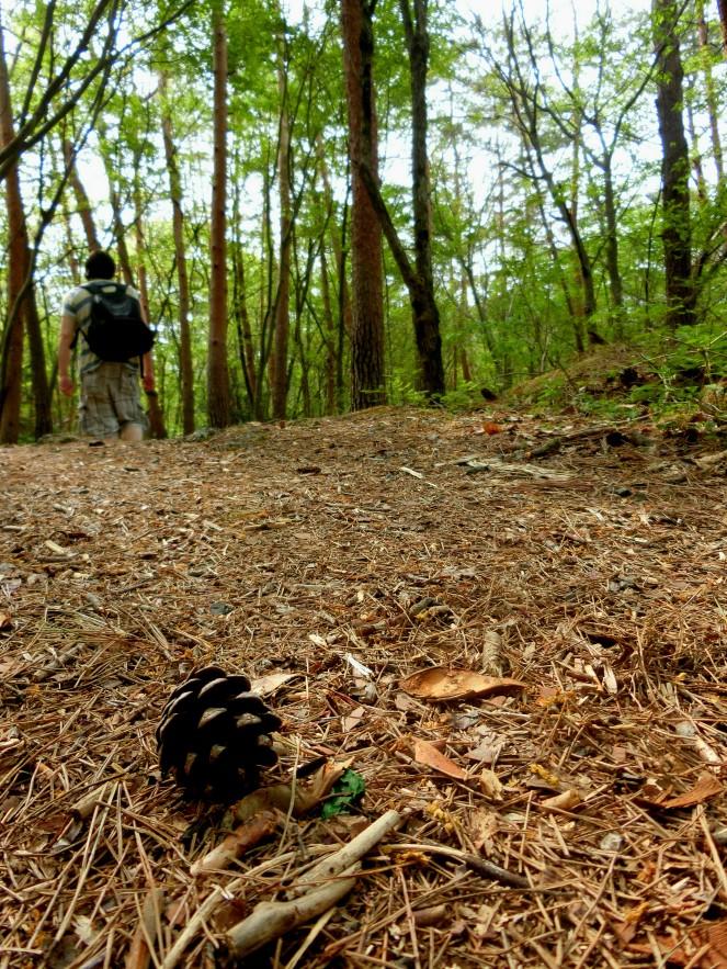 forêt suicide tokyo aller Aokigahara hanté mort mont fuji